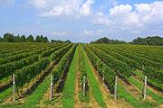 能登ワイン畑
